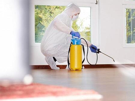 Технология уничтожения насекомых в доме: способы и правила